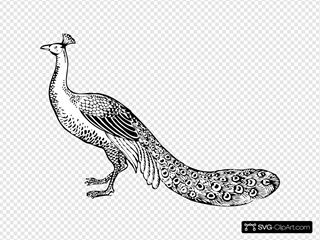 Peacock SVG Cliparts