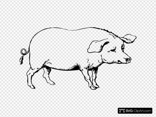 Pig 1 Clipart