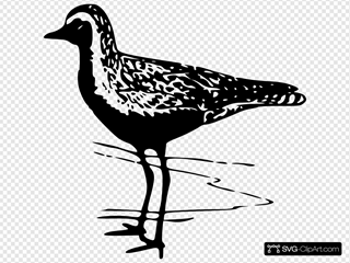 Golden Plover SVG Cliparts