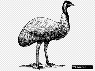 Emu Animal Bird Clipart