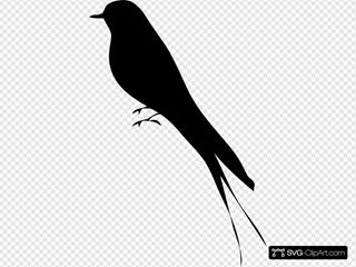 Bird Stand Tree Vine Silhouette