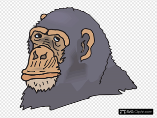 Gray Chimp Head