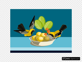 Birds Eating