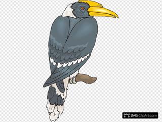 Perched Hornbill
