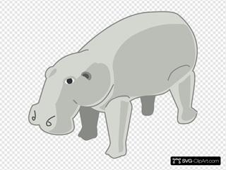 Hippopotamus 6