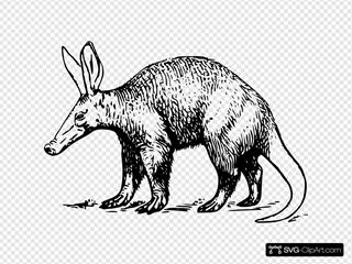 Aardvark Drawing