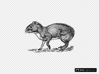 Rodent Animal Clipart