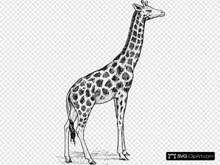 Giraffe SVG Clipart