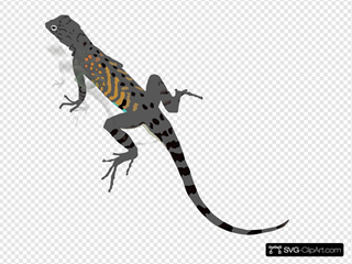 Gray And Orange Striped Lizard