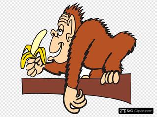 Ape With A Banana