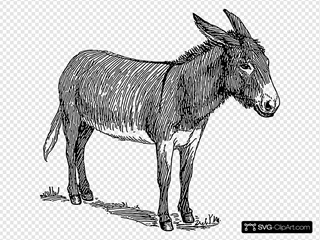 Donkey Drawing