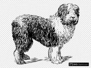 Sheepdog Drawing