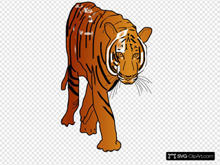 Color Tiger SVG Cliparts