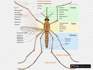 Mosquito Parts Ua