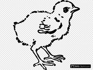 Baby Chick Drawing SVG Clipart