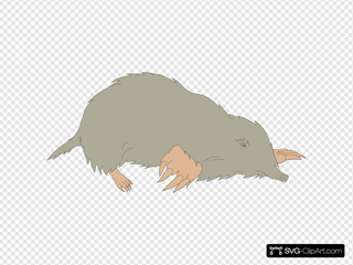 Gray Mole