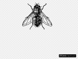 Peterm Housefly Clipart