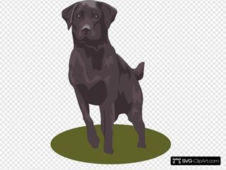 House Pet Dog