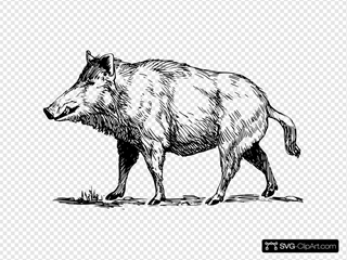 Boar SVG icons
