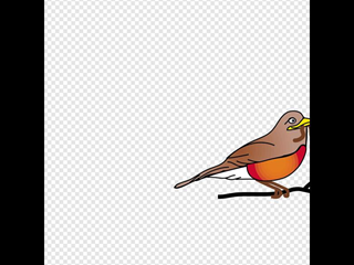 Amercan Robin