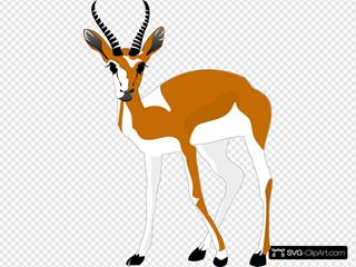 Staring Antelope