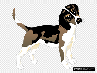 Black And White Beagle