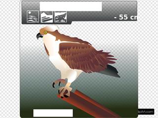 Aguila Pescadora Clipart
