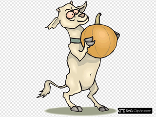 Crazy Goat With A Pumpkin
