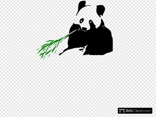 Panda Bear Eating
