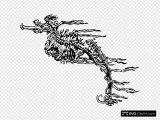 Seahorse Skeleton