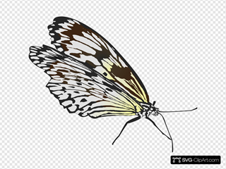 Top View Of A Butterfly