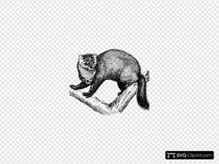 Fisher Animal