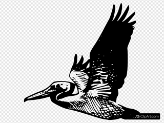 Flying Pelican SVG Cliparts