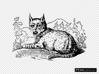 Lynx Animal Sitting