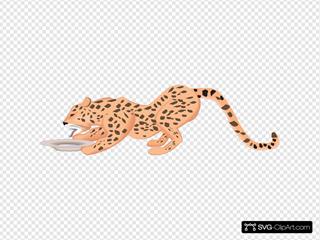 Drinking Cheetah