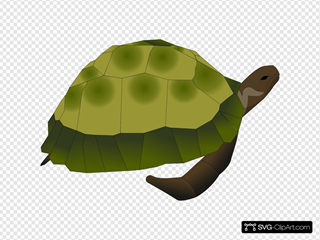 Turtle Out Of Shell SVG Clipart