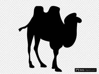 Contour Camel