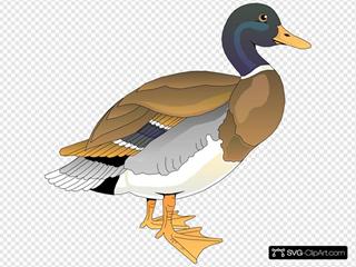 Walking Duck 2