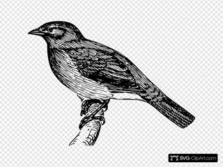 Bird  SVG Clipart