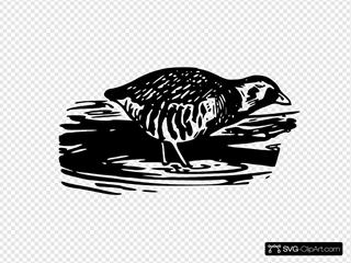 Bird Walking Eating Clipart