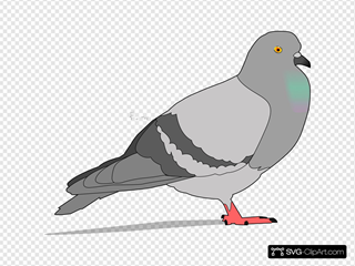 Pigeon With Shadow