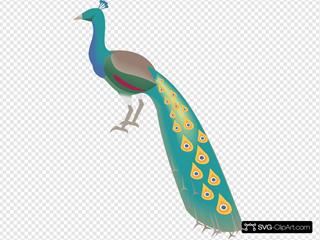 Digital Peacock Art