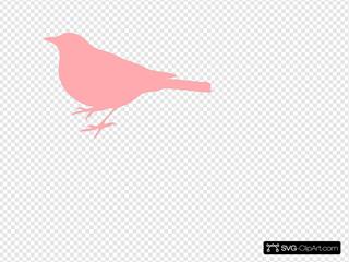 Light Pink Bird