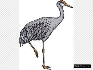 Heron Standing On One Leg