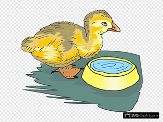 Duckling With Water Bowl