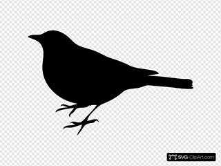 Profile Of A Bird