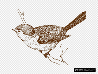 Brown Bird On Branch