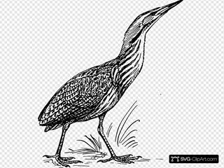 Bittern Bird