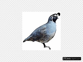 California Quail SVG Clipart