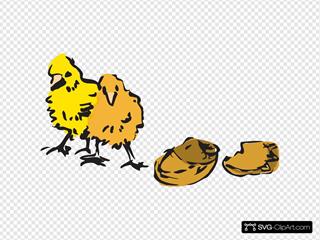 Newborn Chicks